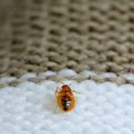 Do dryer sheets repel bed bugs?